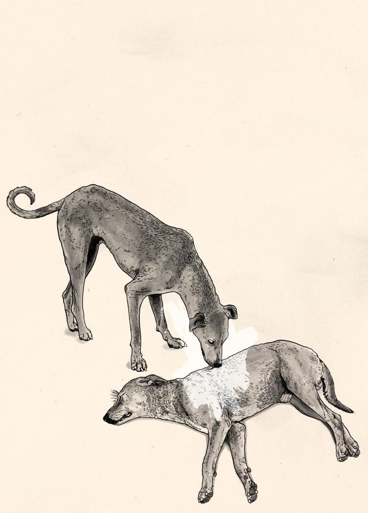 animali-sfigati